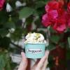 Stuppendo lança gelato especial em comemoração a Primavera e ao Dia do Sorvete